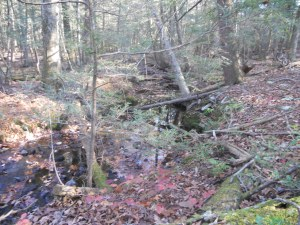 Bare Rock trail and creek